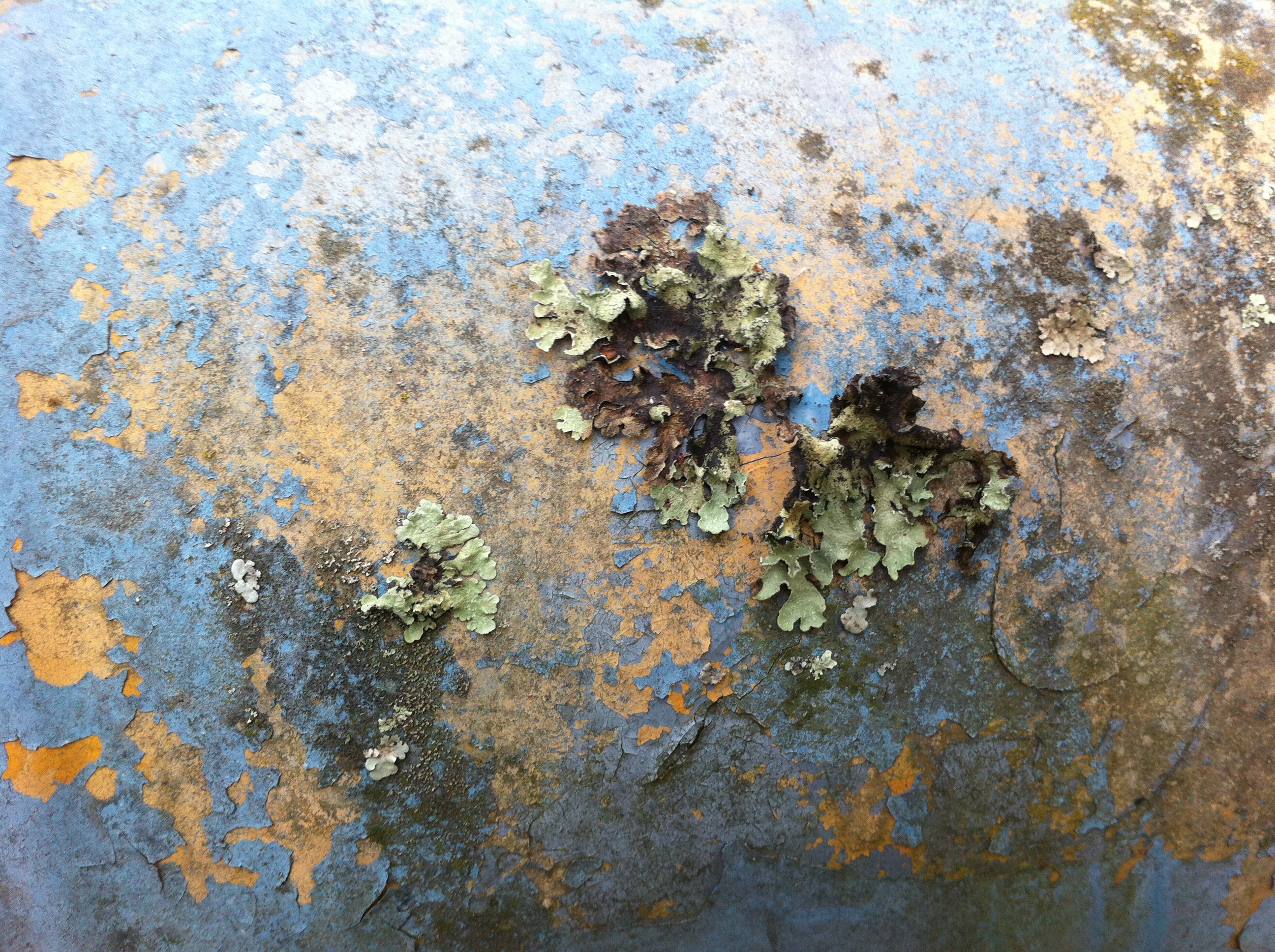painted metal with lichen